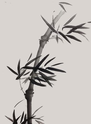 bamboo-zoho.jpg
