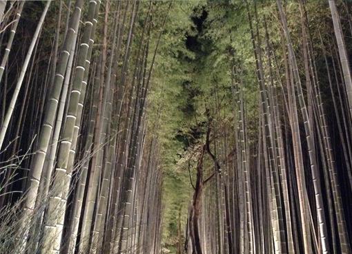 bamboolightup.jpg