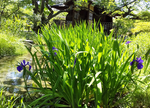 kakitsubata_kikokutei2.jpg