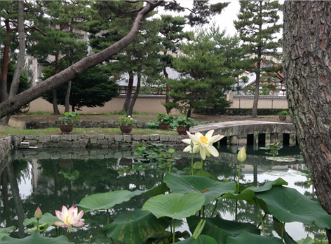 lotus_shokokuji.jpg