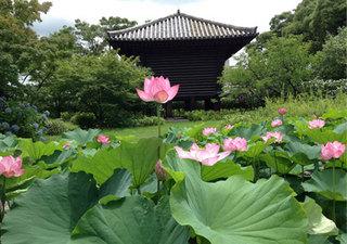 lotus_toji1.jpg