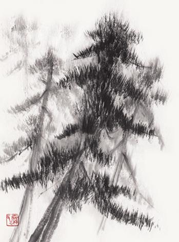 pinetree0.jpg