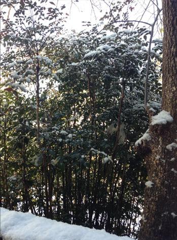 snow_anan.jpg
