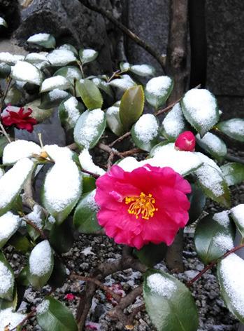 snowcameria2.jpg